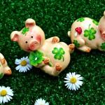 lucky-pig-2402894_1920